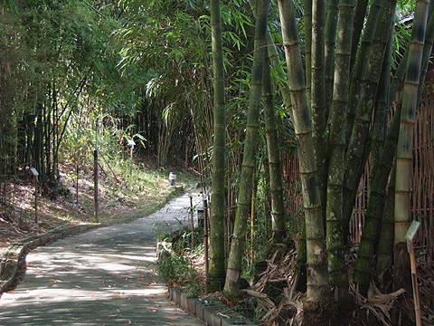 ?{?}_邻近富州的小半天,雧雧休闲农业区,有孟宗竹林,绿色隧道,萤火虫,五色